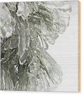 Ice On Pine Branches Wood Print
