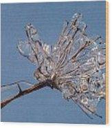 Ice On Stems Wood Print