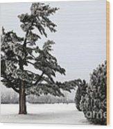 Ice Storm Scenery Wood Print