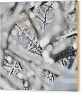 Iced Branches Wood Print
