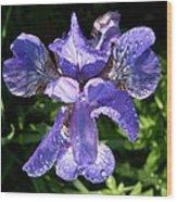 Iced Iris Wood Print