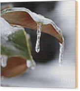 Iced Magnolia Wood Print
