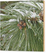 Iced Over Pine Cones Wood Print