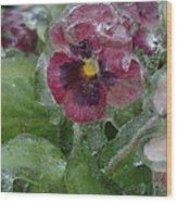 Iced Purple Pansy Wood Print