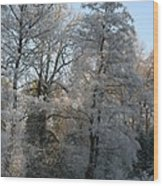 Iced Trees Wood Print