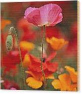 Iceland Poppies Papaver Nudicaule Wood Print