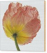 Iceland Poppy 1 Wood Print