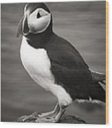 Iceland Puffin Wood Print