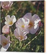Icelandic Poppies Wood Print