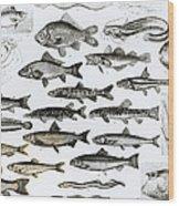 Ichthyology Wood Print