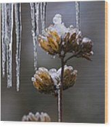 Icicles And Ice Flowers Wood Print