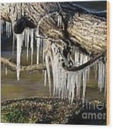 Icicles Hang From Tree Limb Wood Print