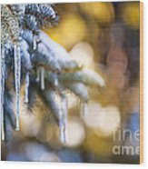Icicles On Fir Tree In Winter Wood Print
