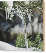 Icicles On Juniper Branch Wood Print