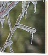 Icy Branch-7506 Wood Print