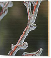 Icy Branch-7512 Wood Print