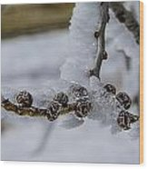 Icy Branch Wood Print