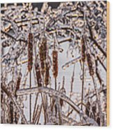 Icy Cattails Wood Print