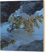 Icy Evergreen Reflection Wood Print