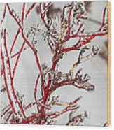 Icy Red Dogwood Wood Print