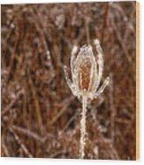 Icy Thistle Wood Print