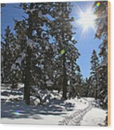 Idaho Blue Bird Day Wood Print