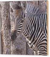 Idaho Falls - Tautphaus Park Zoo Wood Print