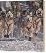 Iditarod Huskies Wood Print