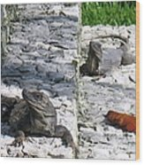 Iguana Bask In The Sun With You Wood Print