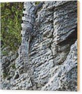 Iguana En La Roca Wood Print