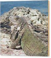 Iguana In The Sun Wood Print