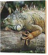 Iguana Wood Print by Jelena Jovanovic