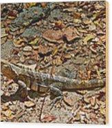 Iguana On A Trail In Manuel Antonio National Preserve-costa Rica Wood Print