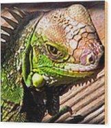Iguana On The Deck At Mammacitas Wood Print