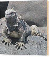 Iguana Or Prehistory Survivor Wood Print