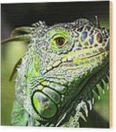 Iguana Smile Wood Print