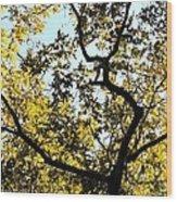 Illuminated Oak Tree Wood Print