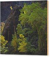Illuminated Shrub Wood Print