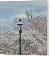 Illuminating Blossoms Wood Print