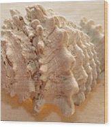 Illumination Series Sea Shells 11 Wood Print