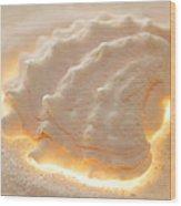 Illumination Series Sea Shells 16 Wood Print