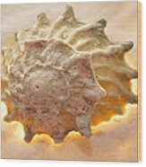 Illumination Series Sea Shells 20 Wood Print