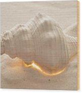 Illumination Series Sea Shells 5 Wood Print
