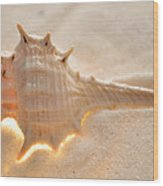 Illumination Series Sea Shells 6 Wood Print