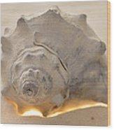 Illumination Series Sea Shells 7 Wood Print