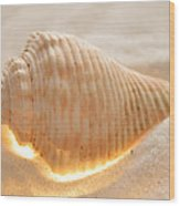 Illumination Series Sea Shells 8 Wood Print