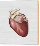 Illustration Of Human Heart Wood Print by Stocktrek Images