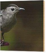 I'm A Cat Bird And I Sound Like One Too Wood Print