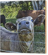 I'm All Ears Wood Print by Kaye Menner