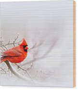 Img 2559-11 Wood Print